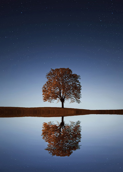 Tree and the night sky